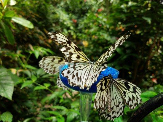 magic wings butterfly